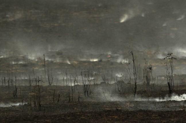 x81524238_O-Para-e-o-estado-com-maior-indice-de-desmatamento-da-Amazonia-Legal-de-acordo-com-Bole.jpg.pagespeed.ic.WzbgDhetCC