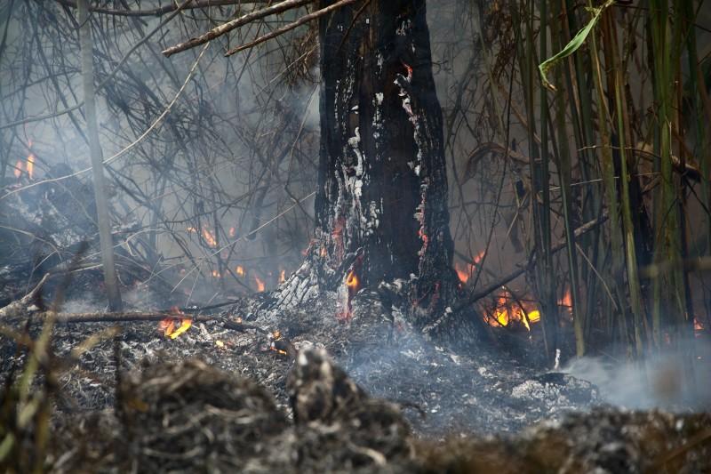 Foto: Douglas Freitas / Amigos de la Tierra Brasil