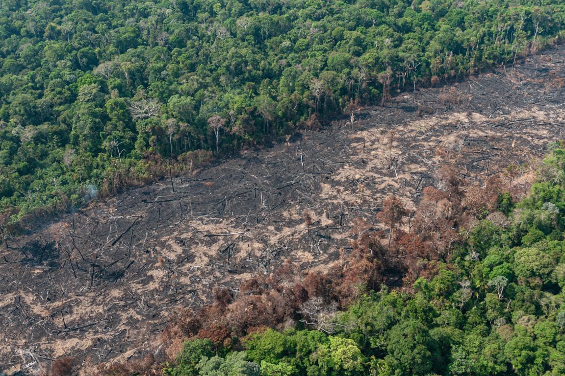 queimada-desmatamento